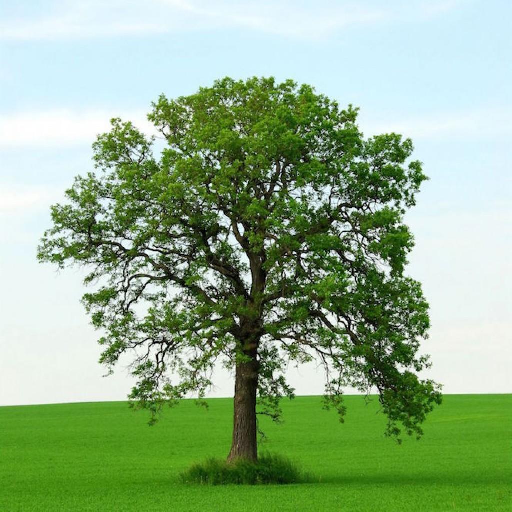 lifetree image 1