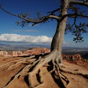 lifetree image 2